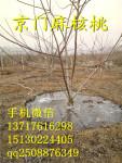 麻核桃树春季管理-返青水