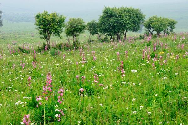丰宁坝上草原柳树沟自然风景区是坝上草原最美的旅游景区,也是最好的