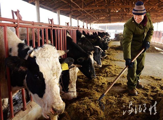现代化奶牛小区1.jpg