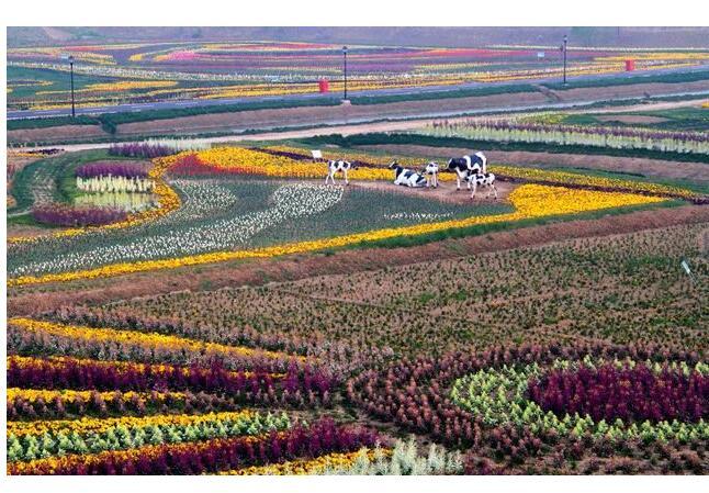 江苏大丰区农业结构调整工作推进迅速